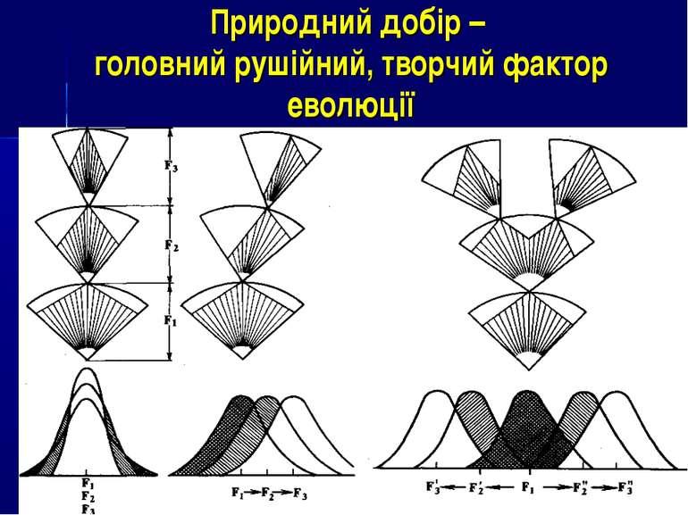 Природний добір – головний рушійний, творчий фактор еволюції