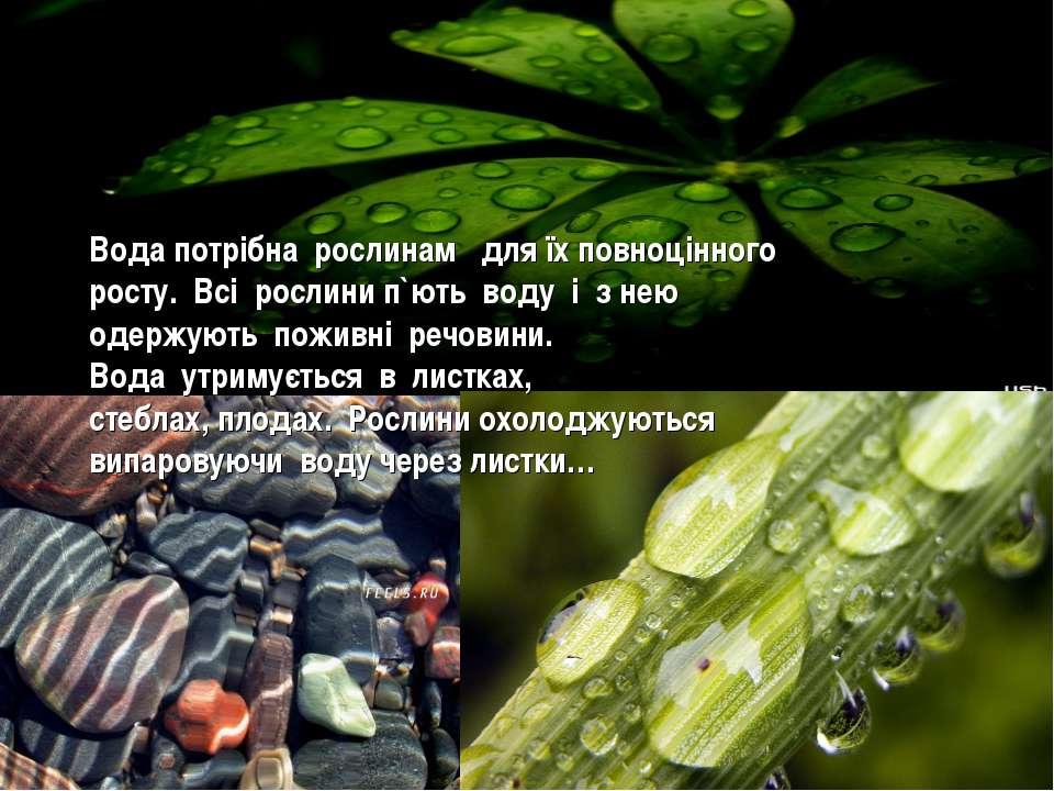 Вода потрібна рослинам для їх повноцінного росту. Всі рослини п`ють воду і з ...