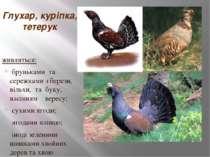Глухар, куріпка, тетерук живляться: бруньками та сережками з берези, вільхи, ...