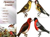 Прилітні птахи: чиж; щиглик; шишкар; снігур; омелюх; чечітки; вівсянки