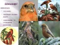 Шишкарі живляться: плодами; насінням лісових дерев ялиновими та сосновими шиш...