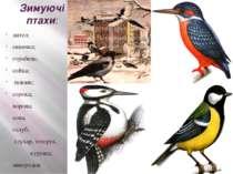 Зимуючі птахи: дятел; синичка; горобець; сойка; повзик; сорока; ворона; сова;...