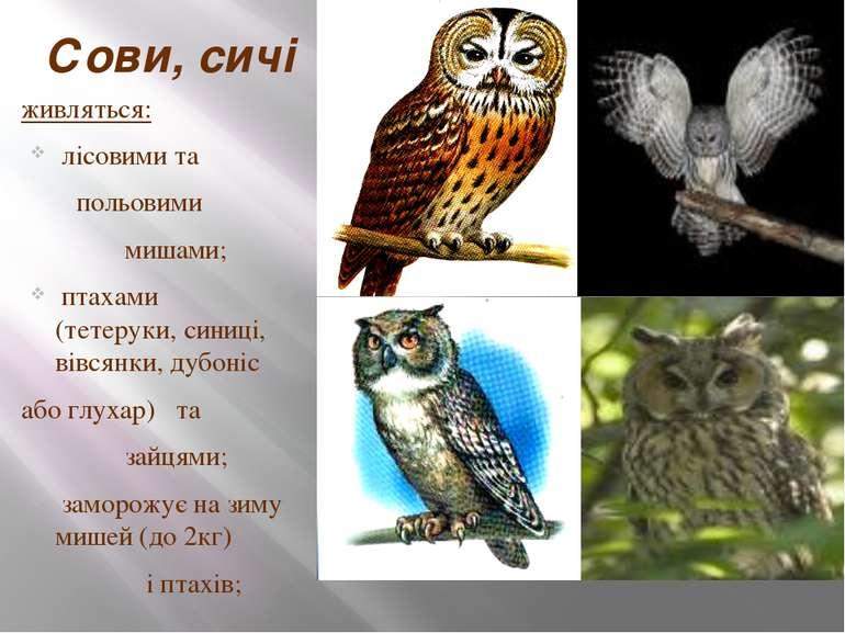 Сови, сичі живляться: лісовими та польовими мишами; птахами (тетеруки, синиці...