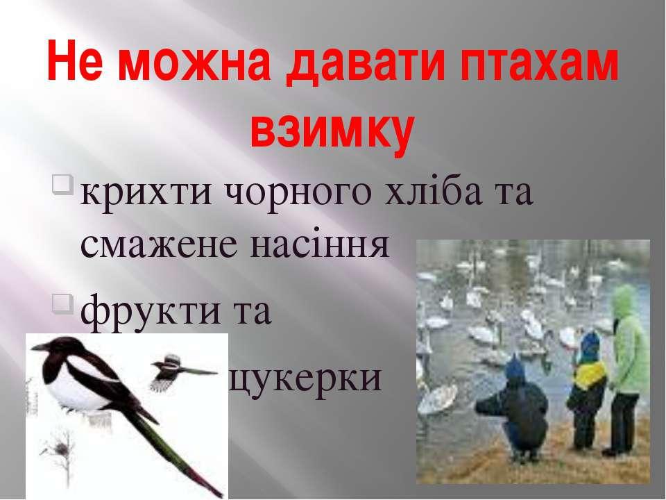 Не можна давати птахам взимку крихти чорного хліба та смажене насіння фрукти ...