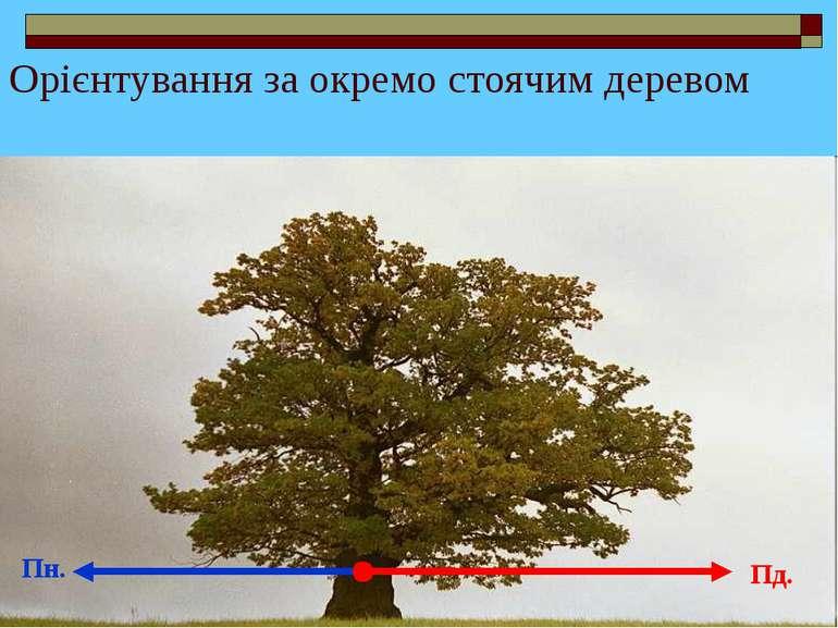 Орієнтування за окремо стоячим деревом Пн. Пд.
