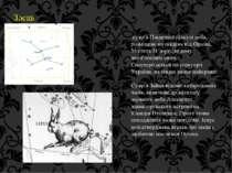 Заєць сузір'я Південної півкулі неба, розміщене на південь від Оріона. Містит...