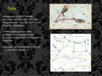"""Риби зодіакальне сузір'я. Умовно поділяють на """"північну Рибу"""" (під Андромедою..."""