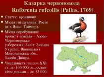 Казарка червоновола Rufbrenta rufcollis (Pallas, 1769) Статус: вразливий. Міс...