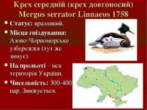 Крех середній (крех довгоносий) Mergus serrator Linnaeus 1758 Статус: вразлив...