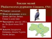 Баклан малий Phalacrocorax pygmaeus (Linnaeus, 1761) Статус: зникаючий. Місця...