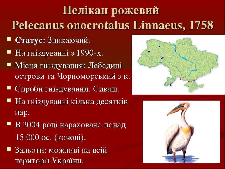 Пелікан рожевий Pelecanus onocrotalus Linnaeus, 1758 Статус: Зникаючий. На гн...