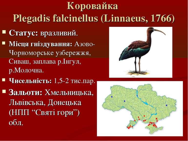Коровайка Plegadis falcinellus (Linnaeus, 1766) Статус: вразливий. Місця гніз...