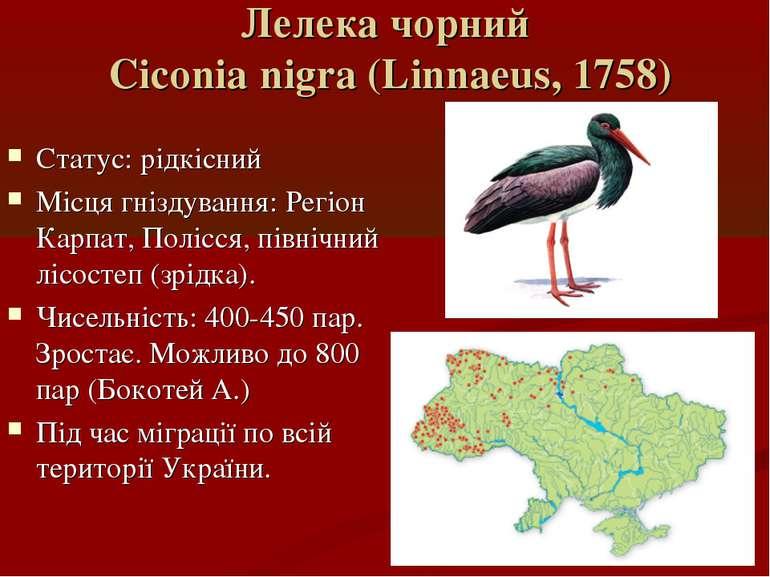 Лелека чорний Ciconia nigra (Linnaeus, 1758) Статус: рідкісний Місця гніздува...