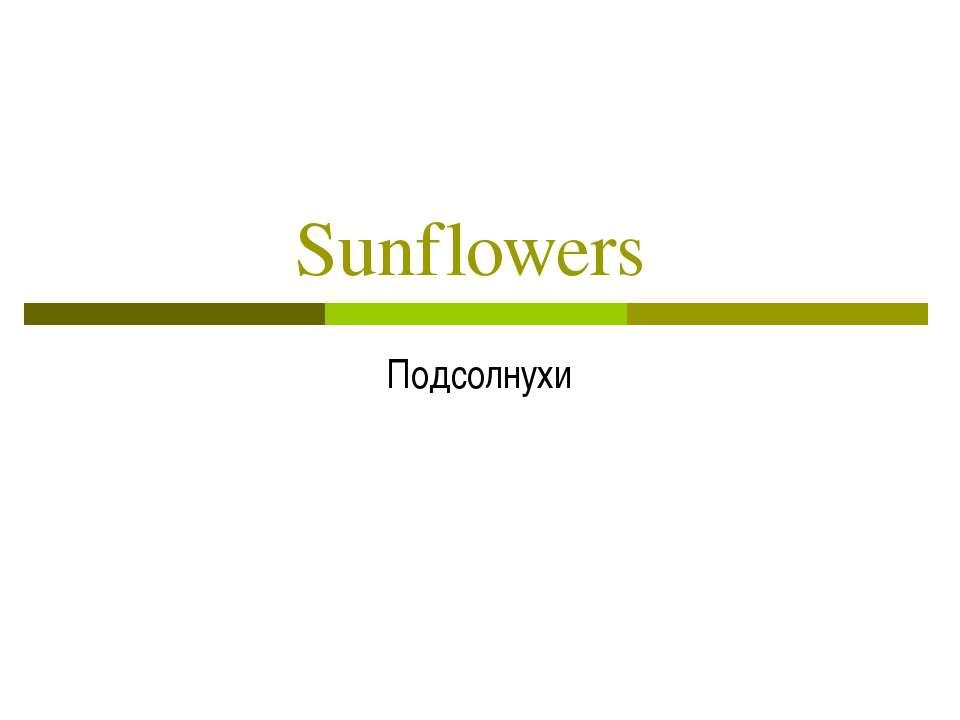Sunflowers Подсолнухи