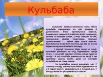 Кульбаба Кульбаба - символ весняного тепла. Квітка кульбаби народилася на сві...