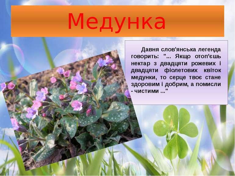 """Медунка Давня слов'янська легенда говорить: """"... Якщо отоп'єшь нектар з двадц..."""