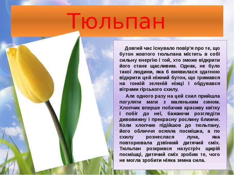 Тюльпан Довгий час існувало повір'я про те, що бутон жовтого тюльпана містить...