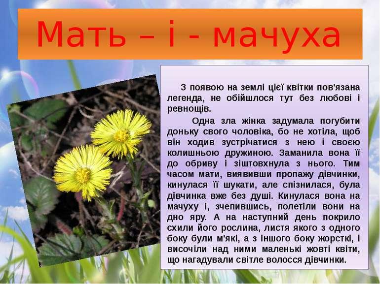 Мать – і - мачуха З появою на землі цієї квітки пов'язана легенда, не обійшло...