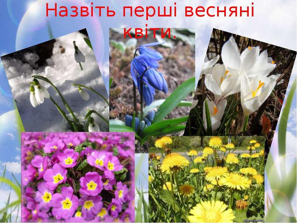Назвіть перші весняні квіти.