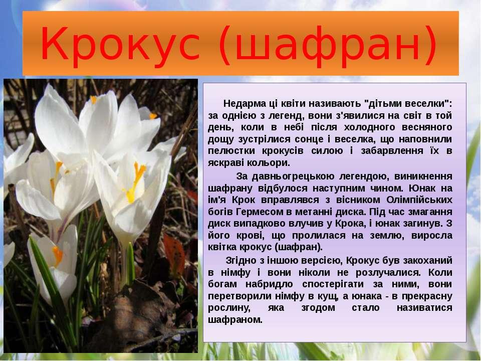"""Крокус (шафран) Недарма ці квіти називають """"дітьми веселки"""": за однією з леге..."""
