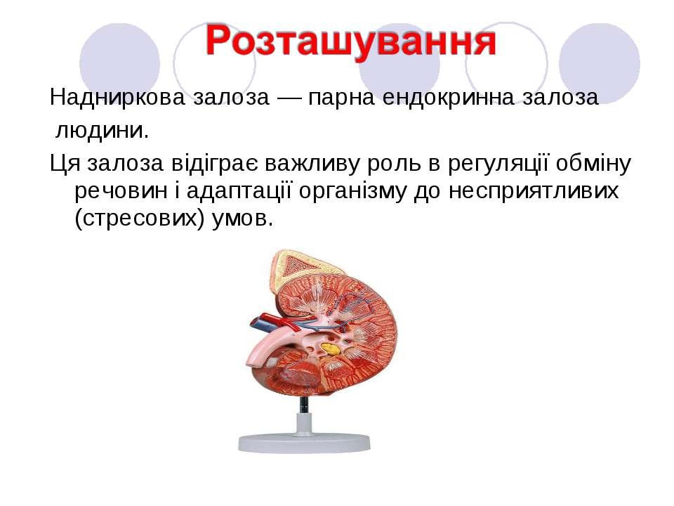 Надниркова залоза — парна ендокринна залоза людини. Ця залоза відіграє важлив...