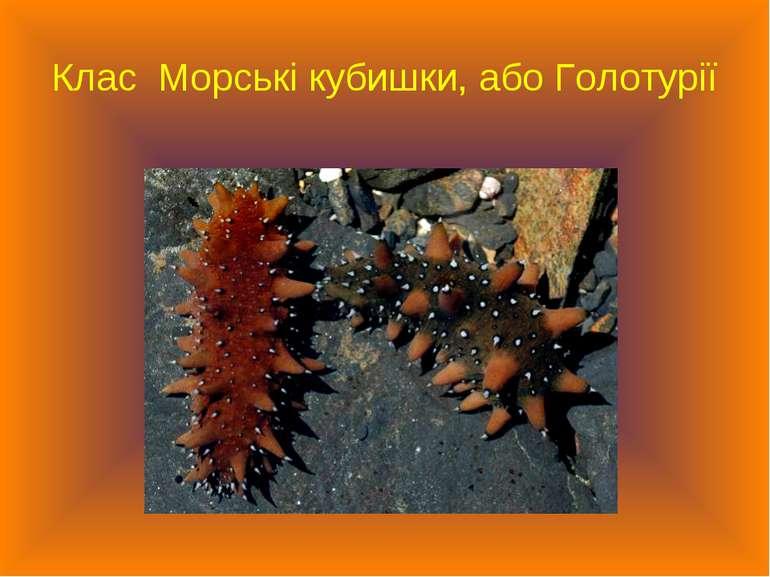 Клас Морські кубишки, або Голотурії