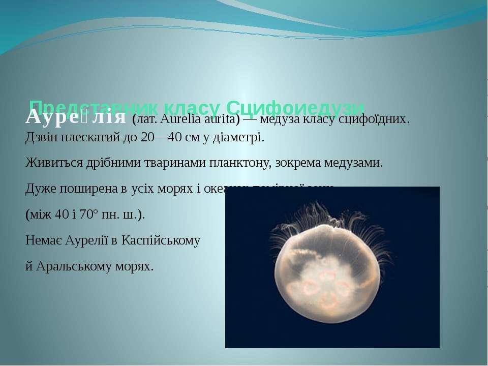 Представник класу Сцифоиедузи Ауре лія (лат. Aurelia aurita) — медуза класу с...