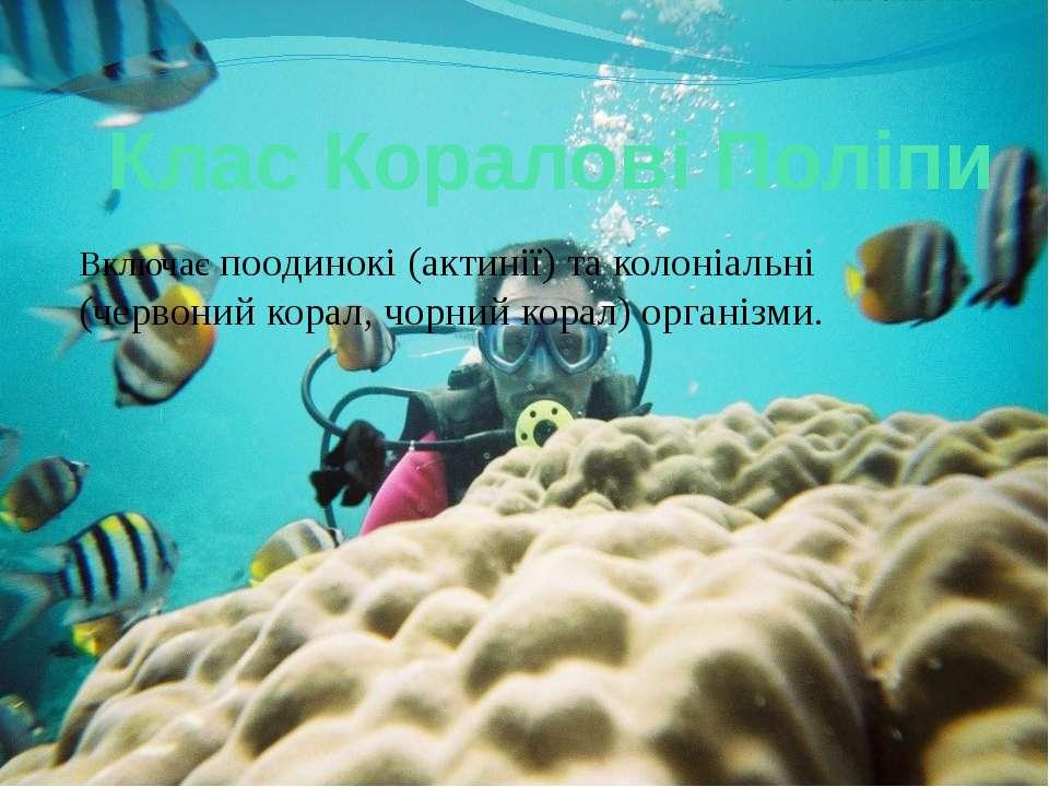 Клас Коралові Поліпи Включає поодинокі (актинії) та колоніальні (червоний кор...