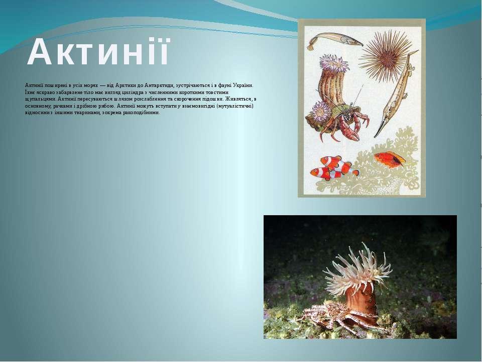 Актинії Актинії поширені в усіх морях — від Арктики до Антарктиди, зустрічают...