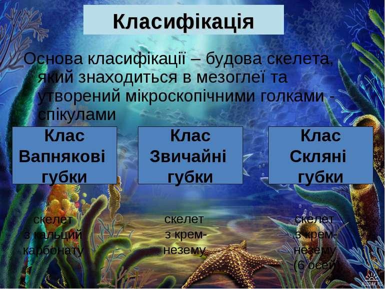 Класифікація Основа класифікації – будова скелета, який знаходиться в мезогле...