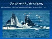 Велика кількість планктону приваблює найбільших тварин на Землі - китів Орган...
