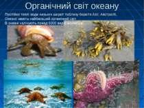 Органічний світ океану Постійно теплі води низьких широт поблизу берегів Азії...