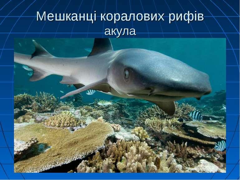 Мешканці коралових рифів акула
