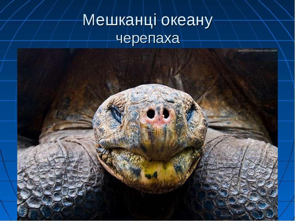 Мешканці океану черепаха