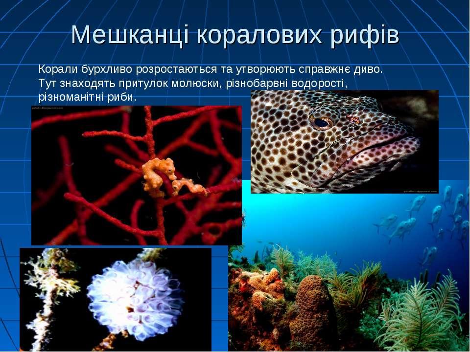 Мешканці коралових рифів Корали бурхливо розростаються та утворюють справжнє ...