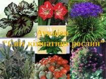 """Аукціон """"Світ кімнатних рослин"""""""