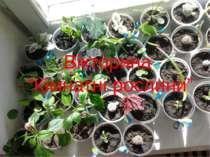 """Вікторина """"Кімнатні рослини"""""""