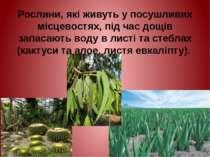 Рослини, які живуть у посушливих місцевостях, під час дощів запасають воду в ...