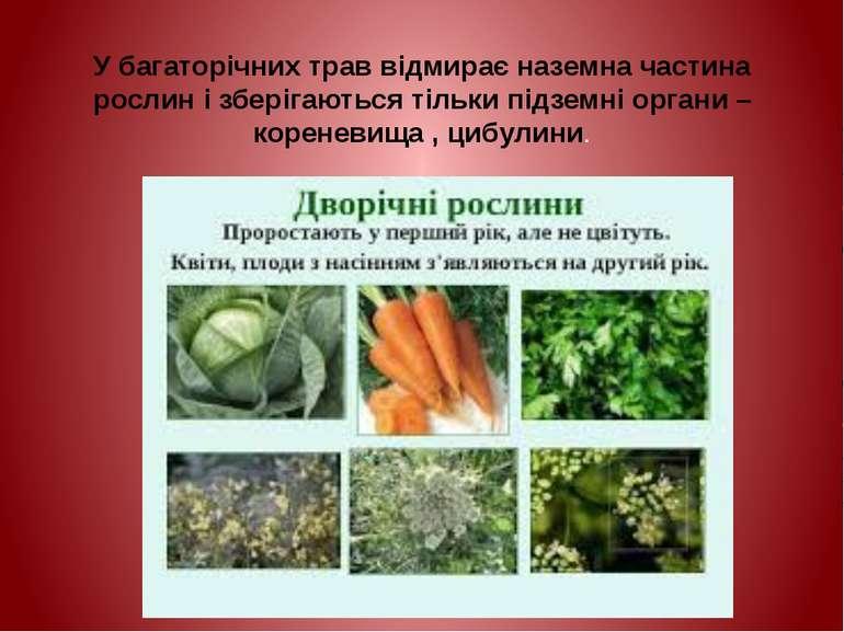 У багаторічних трав відмирає наземна частина рослин і зберігаються тільки під...