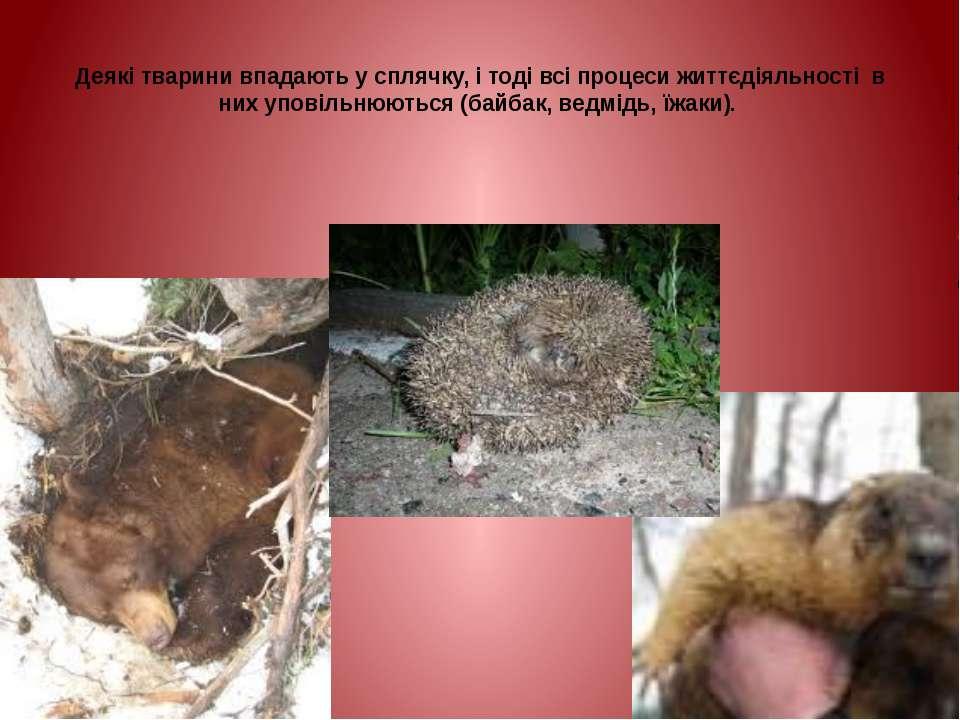 Деякі тварини впадають у сплячку, і тоді всі процеси життєдіяльності в них уп...