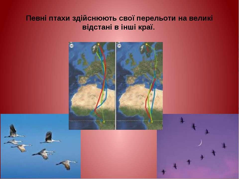 Певні птахи здійснюють свої перельоти на великі відстані в інші краї.