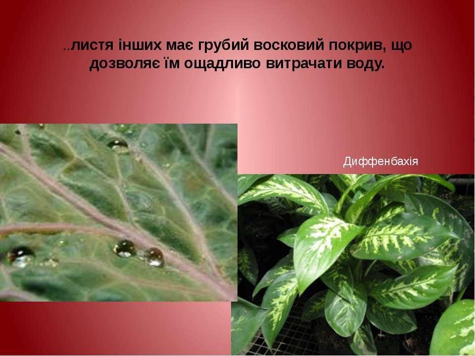 ..листя інших має грубий восковий покрив, що дозволяє їм ощадливо витрачати в...