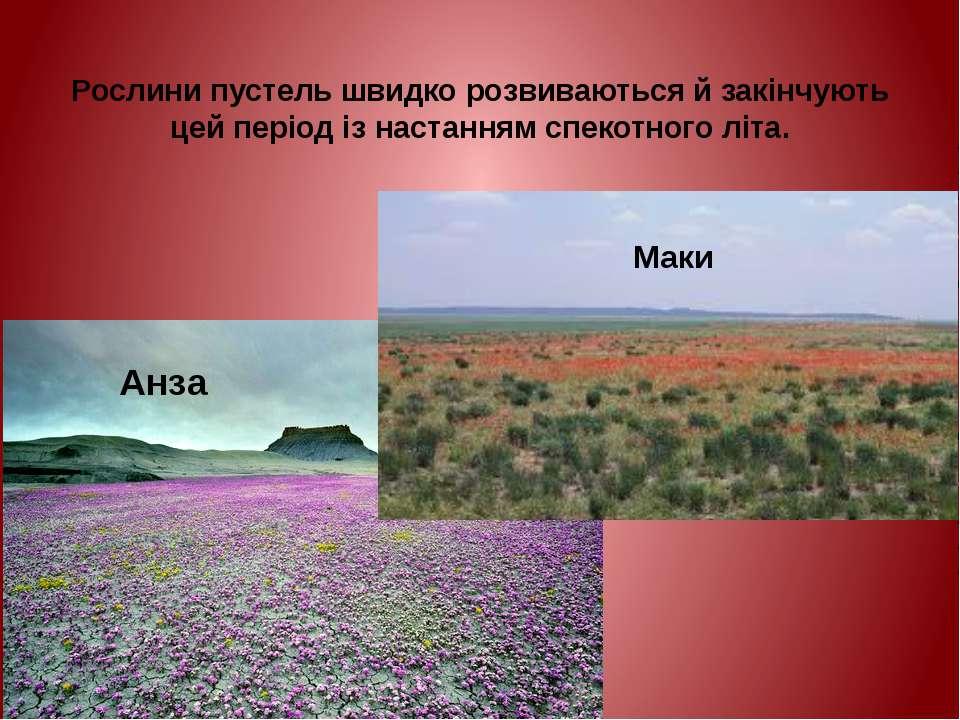 Рослини пустель швидко розвиваються й закінчують цей період із настанням спек...