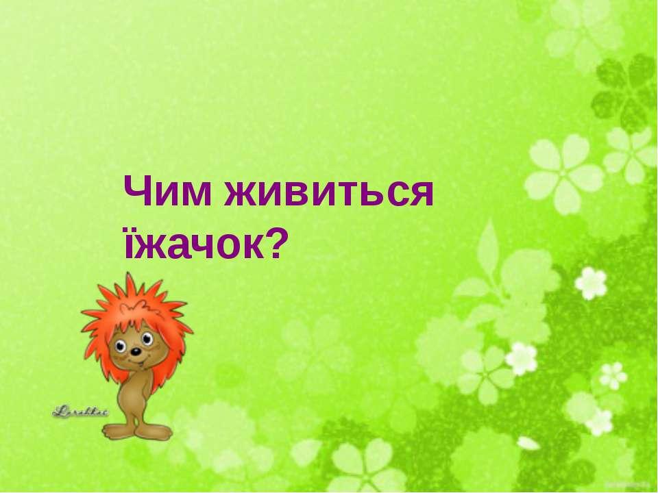 Чим живиться їжачок?