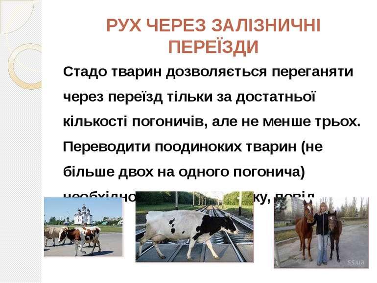 РУХ ЧЕРЕЗ ЗАЛІЗНИЧНІ ПЕРЕЇЗДИ Стадо тварин дозволяється переганяти через пере...