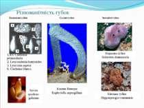 Різноманітність губок Кошик Венери Euplectella aspergillum Кінська губка Hipp...