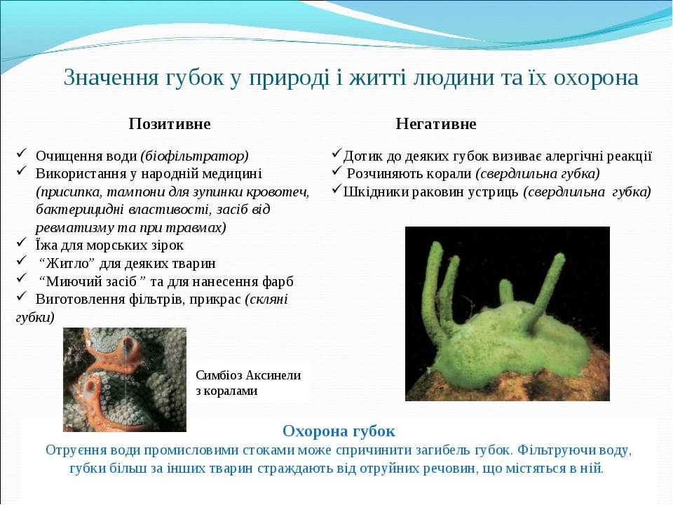 Значення губок у природі і житті людини та їх охорона Очищення води (біофільт...