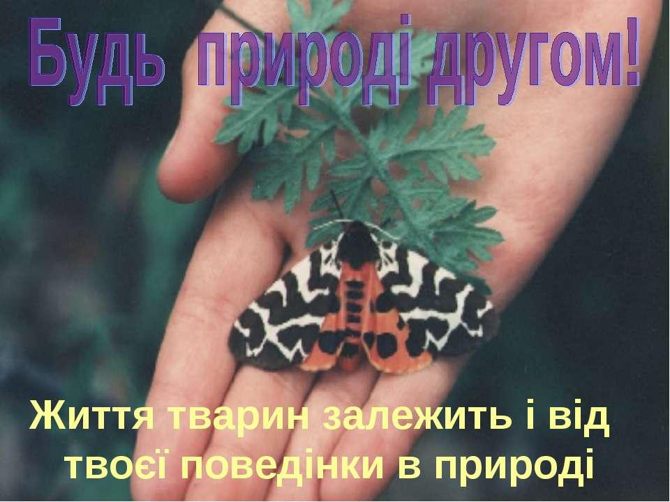 Життя тварин залежить і від твоєї поведінки в природі