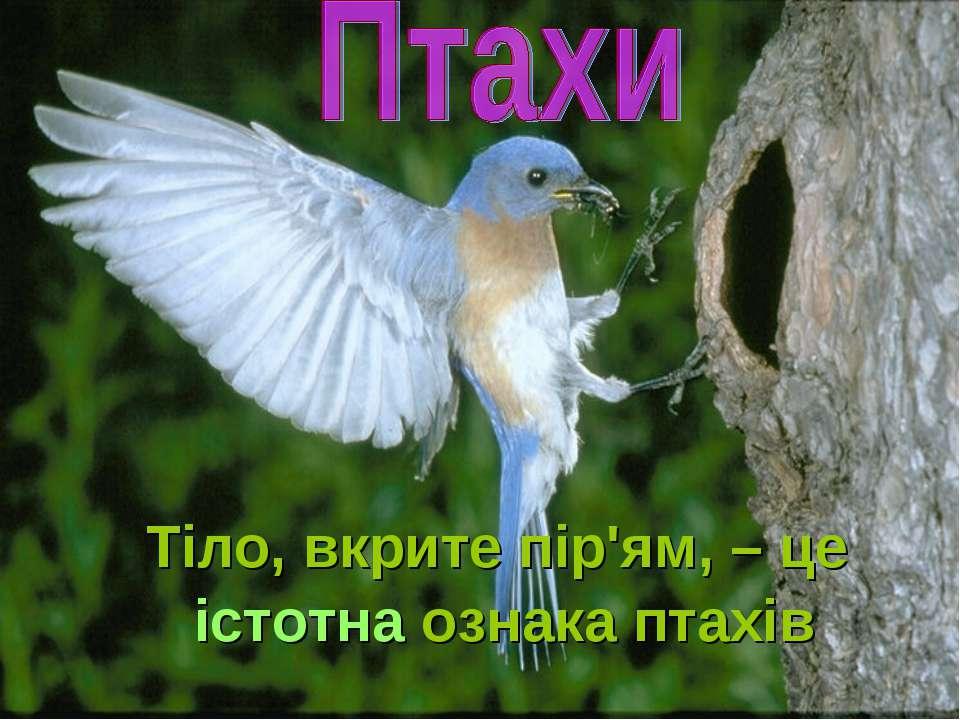 Тіло, вкрите пір'ям, – це істотна ознака птахів