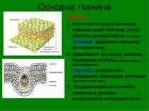 Основна тканина Будова: Фотосинтезуюча основна тканина-живі клітини, котрі мі...